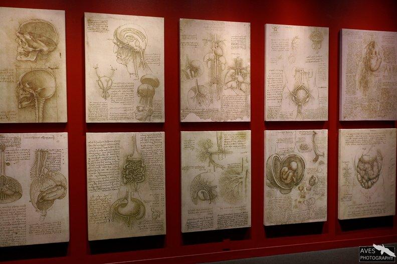 Denver_Science_Museum-07-09-2019-048.jpg