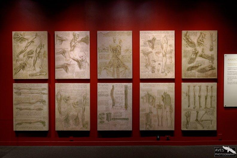 Denver_Science_Museum-07-09-2019-049.jpg