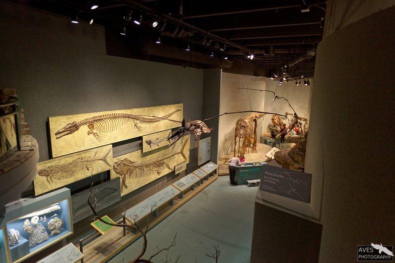 Denver_Science_Museum-07-09-2019-063.jpg
