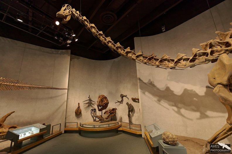 Denver_Science_Museum-07-09-2019-067.jpg