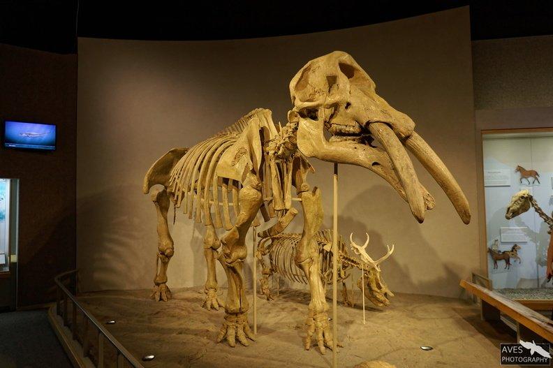 Denver_Science_Museum-07-09-2019-086.jpg