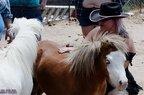 Free Spirit Farm-07-15-2020-035