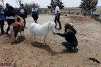Free Spirit Farm-07-15-2020-038