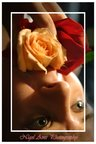 the-rose 10