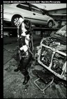 Joes Garage-CMN-1-12-13-368